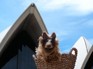 Dog at Sydney Opera House